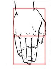 ruka-razmeri